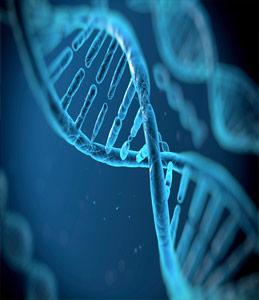 Генетическая работа в хозяйстве с лучшим европейским партнером