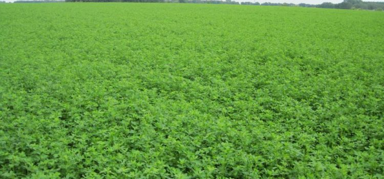 Використання силосуючих добавок в силосі при виробництві біогазу